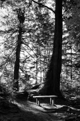 cape-flattery-bench