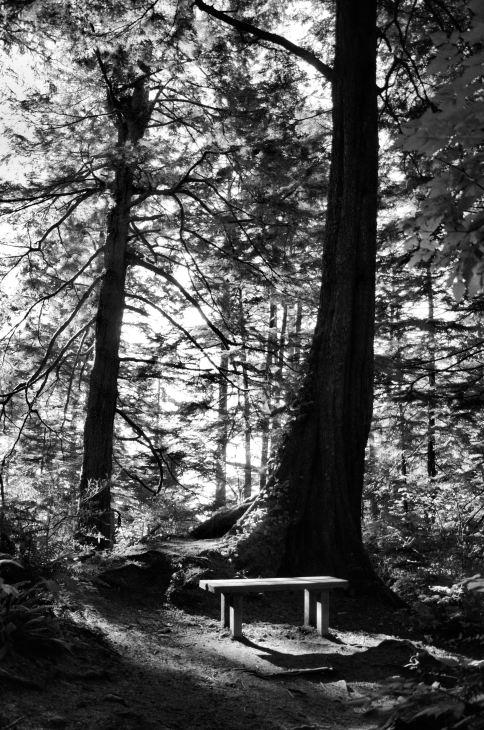 cape-flattery-bench