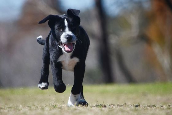 puppy-mix-rescue